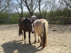 Eclair und Max